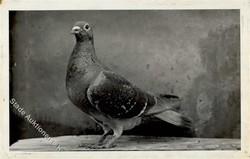 842025: Tiere, Vögel, Tauben