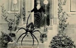 841530: Tiere, Insekten, Spinnen