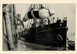 841035: Tiere, Säugetiere, Wale