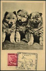 841020: Tiere, Säugetiere, Hunde