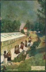 6010: Sri Lanka - Postkarten