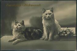 202012: Ansichtskarten, Glückwunsch, Katzen