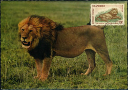 3850: Cameroon