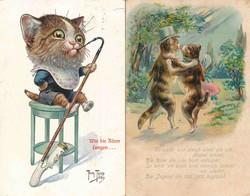 841025: Tiere, Säugetiere, Katzen