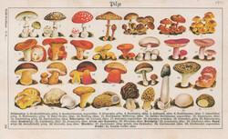 5435: Natur, Pilze
