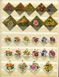 541510: Natur, Blumen, allgemein