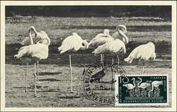 1380: German Democratic Republic - Maximum postcards