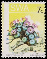 6120: South West Africa