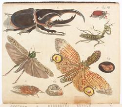 40.10.80: Books - Autographs, Books, literature and illustrated books until 19th century