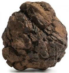 850.18: Varia - Fossilien
