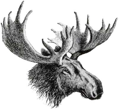 easternauctions-moose.jpg